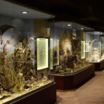meteora-natural-history-museum-tour-5